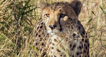 \'เอิร์ธ1วันมหัศจรรย์สัตว์โลก\'ปลุกกระแสอนุรักษ์สัตว์ จัดฉายรอบการกุศลรายได้มอบให้มูลนิธิสืบนาคะเสถียร
