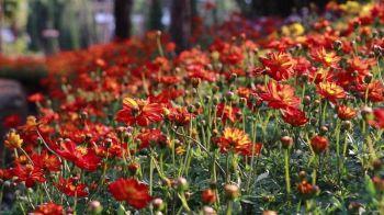มหกรรมไม้ดอก ไม้ประดับ ภาคอีสาน คาดเงินสะพัด64ล้าน (ชมคลิป)