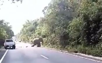 พบรอยเท้า\'ช้างป่า\'ถูกรถชน คาดหายเจ็บ-กลับเข้าโขลงแล้ว