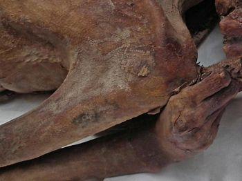 บิดาแห่งรอยสัก! นักวิจัยฮือฮาพบ \'รอยสัก\' บนร่างมัมมี่อายุ 5,000 ปี เก่าแก่ที่สุดในโลก