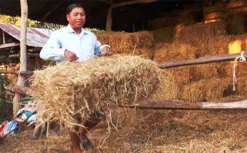 เกษตรกรบุรีรัมย์เร่งอัดฟางฟ่อนกักตุน หวั่นหน้าแล้งเกิดวิกฤตขาดแคลนอาหารสัตว์