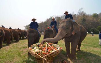 อ.อ.ป. จัดงาน\'วันช้างไทย\'13 มี.ค.นี้ ภายใต้แนวคิด รักษ์ช้าง รักษ์ป่า รักษ์แผ่นดินไทย
