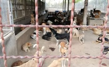 ปศุสัตว์คุมพิษสุนัขบ้า13จว. นนทบุรี-กทม.พบเชื้อประกาศเขตระบาดชั่วคราว