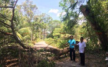 พายุถล่มสตูลต้นไม้โค่นทับถนน หลังคาบ้านปชช.หายทั้งหลัง-มัสยิดพัง