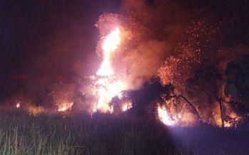 ไฟไหม้ป่าพรุกว่า30ไร่ จนท.ระดมฉีดน้ำสกัดหวั่นลามเข้าบ้านเรือนปชช.