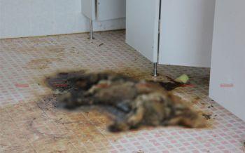 แฉ!พิพิธภัณฑ์สึนามิพังงาถูกปล่อยร้าง พบซากสุนัขตาย-อาคารชำรุด ไร้หน่วยงานดูแล