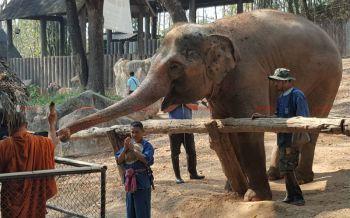 สวนสัตว์เชียงใหม่จัดงาน\'วันช้างไทย\' หวังให้คนไทยเห็นความสำคัญของช้าง