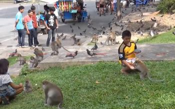 ปศุสัตว์ห่วงลิง\'เขาน้อย-เขาตังกวน\'นับพันตัว ส่อมีเชื้อพิษสุนัขบ้า!