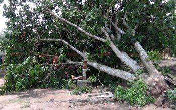 พายุโหมพัดต้นกระท้อนยักษ์โค่นทับบ้านพังยับ แม่เฒ่าวัย90หวิดดับ!