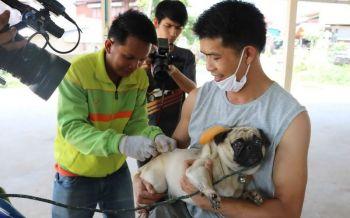 ขอให้มั่นใจ!ปลัดสธ.ออกโรงแจงวัคซีนป้องกันโรคพิษสุนัขบ้าได้มาตรฐาน