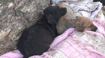 \'หมา-แมว\'ก้นกุฎิโดนด้วย ปศุสัตว์งัดกฏเหล็กห้ามออกนอกวัด