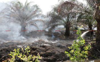 ไฟไหม้สวนปาล์มชาวบ้านเสียหาย33ไร่ เจ้าของสวนเร่งสูบน้ำดับหวั่นลามไปสวนข้างเคียง