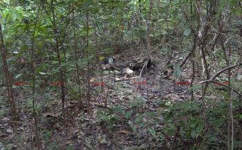 พบศพปริศนาเหลือแค่กระดูกในป่าละเมาะบนเกาะสมุย