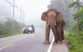 วาง10กฎเหล็กป้อง'ช้างป่า'แก่งกระจานทำร้ายคน
