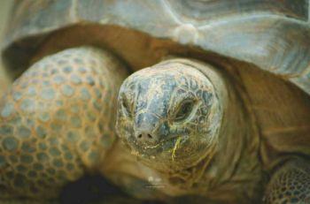 หาชมยาก! สวนสัตว์ดุสิตเปิดชมใกล้ชิด\'เต่าอัลดาบรา\' มีเพียง669ตัวในโลก