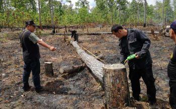 ป่าไม้แม่ฮ่องสอนยึดไม้กระยาเลย พบถูกเจาะทำให้ตาย16ต้น