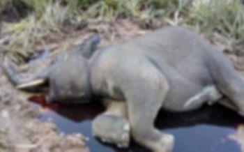 ฝีมือใคร! รองผู้ว่าฯประจวบฯเศร้า ช้างป่ากุยบุรีตายปริศนา