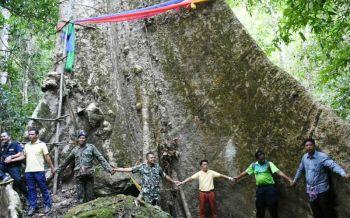 มันใหญ่มาก!บุกสำรวจ'ต้นมันช้างยักษ์'ใหญ่สุดในไทยอายุ100ปี 40คนโอบ