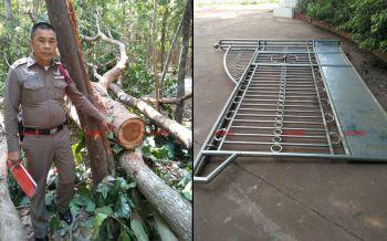 โจรใจบาป! พังประตูวัดป่าลอบตัดไม้พะยูง ขนขึ้นรถหนีลอยนวล