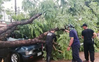 นครพนมสะอื้นพายุถล่มซ้ำ! ต้นไม้โค่นทับรถยนต์พัง