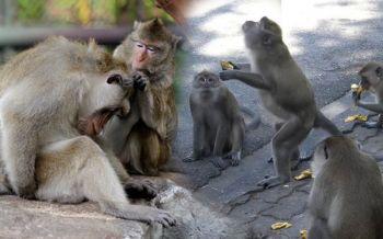 ห่วงนิคมลิง! ประวิตรชี้ถ้าเอาไปไว้เกาะต้องหาอาหารให้ด้วย