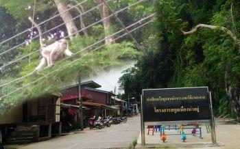 เสียงจากชุมชน'โมเดลพิภพวานร' ทำหมันก็ดีแต่มีหรือ'ลิง'จะยอมง่ายๆ