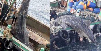 ทช.เดือด! สั่งล่าประมงจับ\'ฉลามวาฬ\'ท้องแก่ \'ธรณ์\'เศร้าใจขอให้เป็นตัวสุดท้ายที่โดนกระทำ