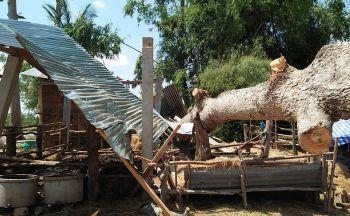 พายุฝนถล่มศรีสะเกษ ฟ้าผ่าคนดับ1-ต้นไม้โค่นทับควายสาหัส
