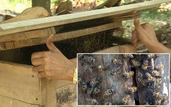 จากอาชีพเสริมกลายเป็นเสาหลัก! \'เลี้ยงผึ้งโพรง\'ทำเงินกว่า3หมื่นต่อเดือน