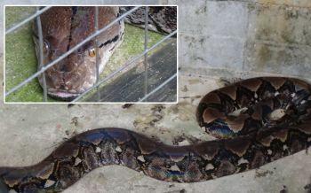\'เจ้าทวดเงิน\'งูเหลือมยักษ์ให้โชค! น่าสงสารเลื้อยหนีฝูงหมาเลี้ยงไว้กว่า38ปี (ชมคลิป)