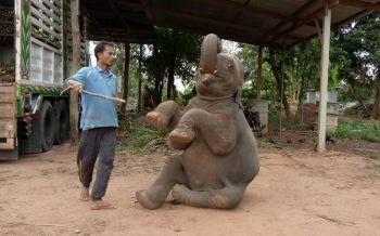 เบื้องหลังความน่ารัก! มาดูการฝึกฝนของควาญช้างกว่าจะเป็นช้างแสนรู้ (ชมคลิป)