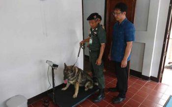 กรมปศุสัตว์เร่งฟื้นสถานพยาบาลสัตว์ทั่วประเทศ จ่อตั้งระดับอำเภอปีนี้20แห่ง