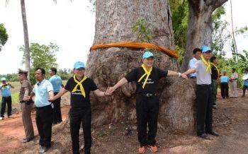 ฮือฮา!'ต้นยางนา'อายุกว่า200ปี15 คนโอบ โคราชจัดพิธีบวชอนุรักษ์