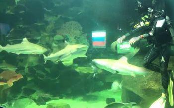 สีสันสวนสัตว์เชียงใหม่! ปลาฉลามเสี่ยงทายผลบอลโลกคู่แรก \'ซาอุฯ ชนะ รัสเซีย\' (ชมคลิป-ประมวลภาพ)