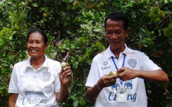 2สามี-ภรรยาชาวบุรีรัมย์หันปลูก\'เงาะทุเรียน\'ผสมผสาน\'กล้วยมะนาว\'คนแห่จองถึงสวนรายได้ปีละหลายแสน