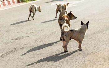 เซ่นพิษสุนัขบ้ารายที่11 พื้นที่โรคระบาด32จว.-กรมปศุสัตว์เร่งฉีดวัคซีนให้ครบ8.24ล้านตัว