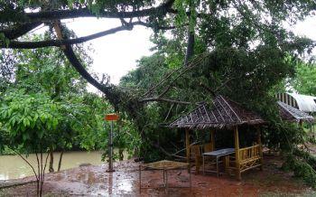 สตูลยังอ่วม!พายุลากยาวถึง20มิ.ย.นี้ ลมแรงโค่นต้นไม้ล้มทับโรงมโนราห์พังยับ