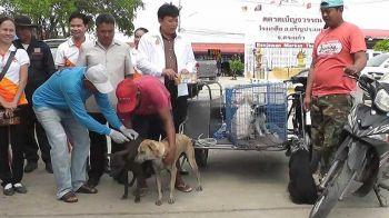 หมาบ้าเขมรลอบเข้าไทยกัดหนุ่ม รปภ.ตลาดโรงเกลือ ปศุสัตว์อรัญฯลุยฉีดวัคซีนป้องกันระบาด