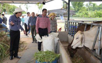 \'อธิบดีปศุสัตว์\'ยืนยัน! โครงการโคบาลบูรพาจ.สระแก้ว ไม่พบสวมโสร่ง-เป็นวัวในประเทศ