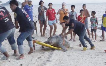 เต่าทะเลอ่าวไทยวิกฤติ!ปี60ตายแล้ว30ตัว 'เศษถุงพลาสติก-อวน'สาเหตุหลัก