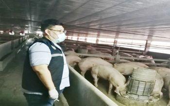 เตือนภัย!! ปศุสัตว์สั่งอายัด \'หมู\' ราชบุรี 3 ฟาร์ม 2.8 หมื่นตัว พบสารเร่งเนื้อแดง