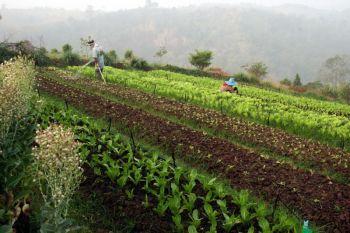 เดินหน้าพัฒนา'เกษตรอินทรีย์' เชื่อมโยงเครือข่ายระดับพื้นที่ชี้เป้ารับซื้อผลผลิต
