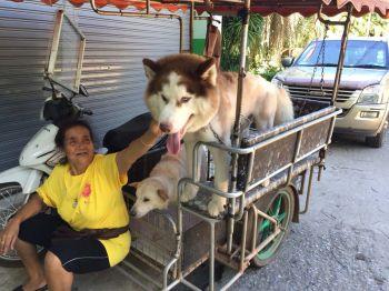 ตะลอนเที่ยว : รักไม่มีพรมแดน'โครงการทำหมันหมาแมวจรจัด'เพื่อสวัสดิภาพคนและสัตว์