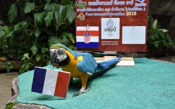 \'เจอาร์\'มาคอร์แสนรู้แห่งสวนสัตว์เปิดเขาเขียว ทาย\'ฝรั่งเศส\'แชมป์บอลโลก2018