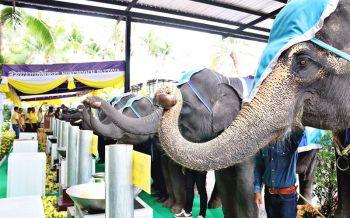 ช้างแสนรู้9เชือกร่วมพิธีหล่อเทียนพรรษา สวนนงนุชจัดใหญ่9วัน9คืนสืบสานประเพณีไทย