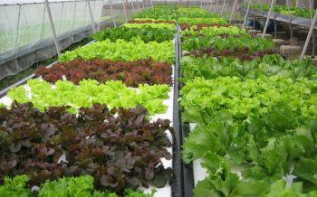 กษ.โต้มอร์มูฟ ยันปลูกพืช\'ไฮโดรโปนิกส์\'ไม่ใช่เกษตรอินทรีย์ ใช้สารเคมี-กำจัดศัตรูพืชได้