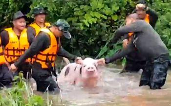 ทหารรุดช่วย8ชีวิต\'ทีมหมูบ้าน\'หลุดคอก หลังฝนถล่มหนักพื้นที่\'นครพนม\' (คลิป)