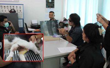 กลุ่มWatchdog-องค์กรสวัสดิภาพสัตว์ เข้าแจ้งความเอาผิดมือยิงลูกดอกปักอกแมว
