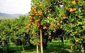 กษ.ไล่ทวงคืนส.ป.ก. จ่อโค่นทิ้ง3สวนส้มดัง แฉอดีตบิ๊กขรก.กว้านซื้อที่\'วังน้ำเขียว\'ปลูกองุ่น