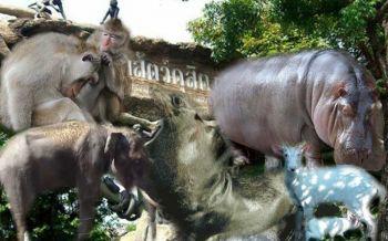 เร็วๆ รีบไปดู 5 สัตว์สำคัญ! สวนสัตว์ดุสิตก่อนย้ายไปที่ใหม่